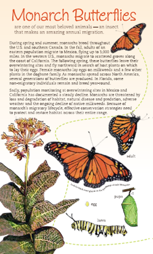 Southeast Monarchs, Milkweeds, and Host Plants Brochure