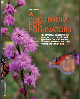 A Patchwork for Pollinators