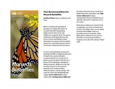 Plant Recommendations for Monarch Butterflies for the Southern Plains