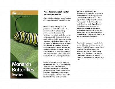Plant Recommendations for Monarch Butterflies for the Upper Midwest