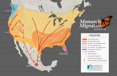 Monarch Migration: Spring and Fall