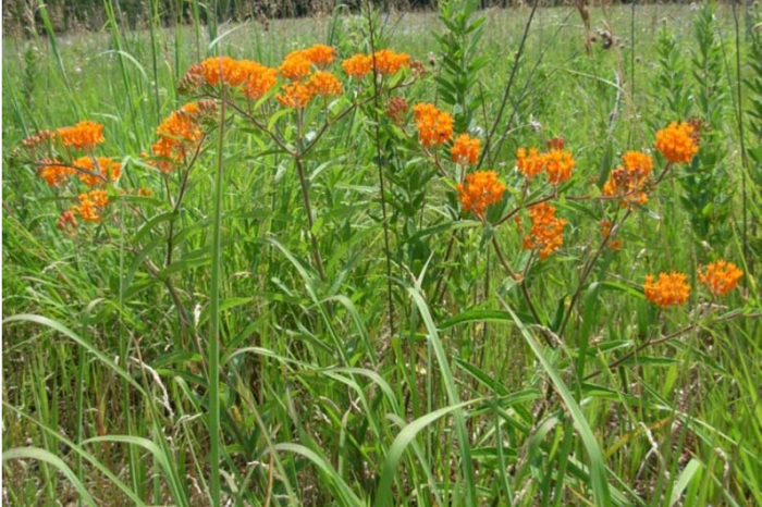 USFS Pollinator Gardens and Other Habitat Enhancement Projects